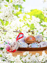 Easter eggs with blossom in the spring Royalty Free Stock Image