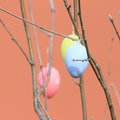 Easter eggs blue yellow and pink hanging on a thin branches Stock Photo
