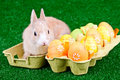 Easter eggs and bunny in box Royalty Free Stock Photos