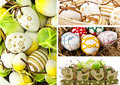 Easter eggs and chicken Royalty Free Stock Images