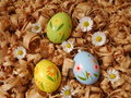 Easter eggs colored with daisies Stock Photography