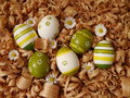 Easter eggs colored with daisies Stock Images