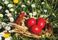Easter eggs colored in woven basket Stock Images