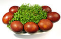 Easter eggs and cress Stock Images