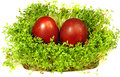 Easter eggs and cress Royalty Free Stock Photography