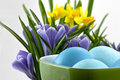 Easter eggs with crocuses and daffodils Stock Photos