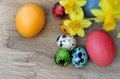 Easter eggs with daffodils paintedr and on wooden background Royalty Free Stock Images