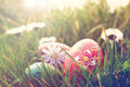 Easter eggs and daisies in the grass hand painted Royalty Free Stock Photo