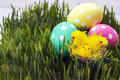 Easter eggs with decorative chicken in fresh green grass.