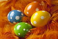 Easter eggs on feather background Royalty Free Stock Photo