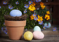 Easter eggs flower pot a blue speckled egg in terra cotta with yellow pink and teal next to and blue daisies marigolds blurred in Royalty Free Stock Photography