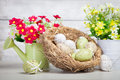 Easter eggs and flowers with spring flower Royalty Free Stock Images