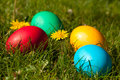 Easter eggs four colorful in green meadow with dandelions Stock Photo