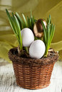 Easter eggs in fresh spring grass Royalty Free Stock Photo