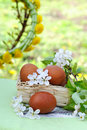 Easter eggs in the garden Stock Image