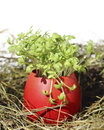 Easter eggs with garden cress in an egg shell Stock Images