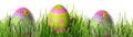 Easter eggs in the grass decorated Royalty Free Stock Photos