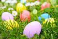 Easter eggs on the grass flower Royalty Free Stock Photography