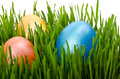 Easter eggs green grass white background Royalty Free Stock Images