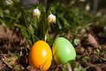 Easter eggs green and orange Stock Photography