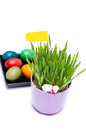 Easter Eggs and Green Plant Royalty Free Stock Photography