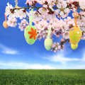 Easter eggs hanging almond tree Royalty Free Stock Photos