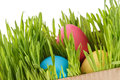 Easter eggs hiden in grass border composition white background Royalty Free Stock Photography