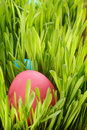 Easter eggs hiden in grass close up photo Stock Images