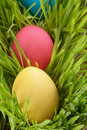 Easter eggs hiden in grass close up photo Stock Photos