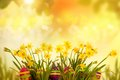 Easter eggs hiding in the grass with daffodil horizontal banner Stock Photo