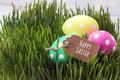 Easter eggs and label with message of Happy Easter in fresh gras