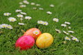 Easter eggs on a meadow Stock Image