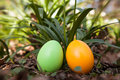 Easter eggs on a meadow Stock Photos