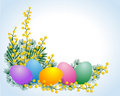 Easter eggs and mimosa Royalty Free Stock Photography
