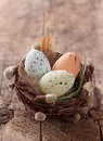 Easter eggs nest Royaltyfri Bild