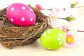 Easter eggs with nest and flowers Royalty Free Stock Images