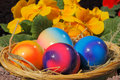 Easter eggs in a nest with flowers Stock Photography