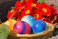 Easter eggs in a nest with flowers Royalty Free Stock Photography