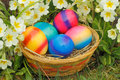 Easter eggs in a nest with flowers in a meadow Stock Photo