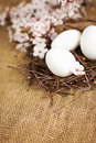 Easter eggs in nest with spring flowers decoration closeup shot of beautiful white branch and jute Stock Photography