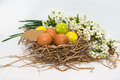 Easter eggs on a nest of spring flowers with sign for text white background Stock Photography