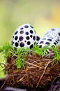 Easter Eggs painted by hand with black and white in real nest Royalty Free Stock Photo