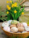 Easter eggs painted with narcissus Stock Photo