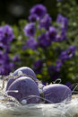 Easter eggs in purple with flowers Royalty Free Stock Images