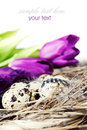 Easter eggs with purple tulip flowers Royalty Free Stock Photo