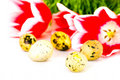Easter eggs with red tulips Royalty Free Stock Photography