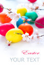 Easter eggs with spring blossom flowers colorful Royalty Free Stock Image