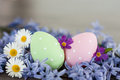 Easter eggs spring in two pink and green polka dot and different spring flowers Royalty Free Stock Photos