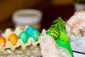 Easter eggs in various colors Royalty Free Stock Photography