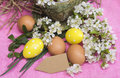 Easter eggs yellow and spring flowers with space for text Royalty Free Stock Photo